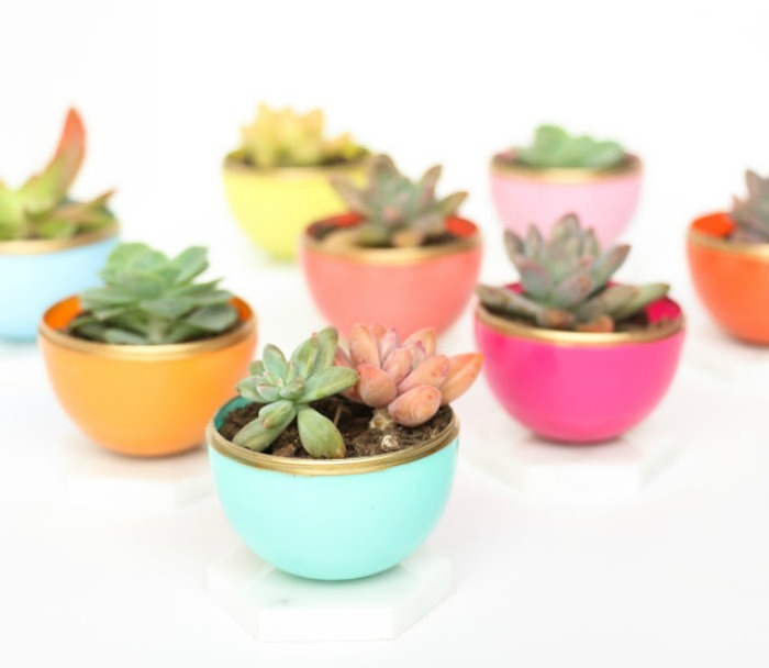 rndup.minisucculentcolor