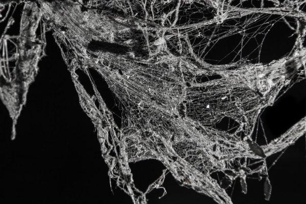 Cobweb picture