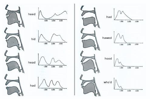 The Basics About Acoustic Phonetics