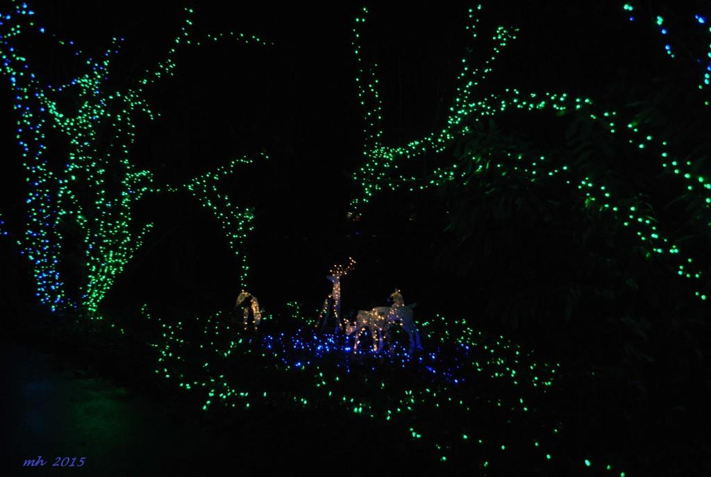 The Christmas Grotto 2015 (19)