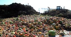 foto articolo spreco alimentare