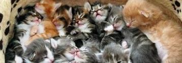 foto articolo gattini uccisi