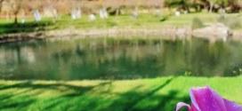 Terme Stufe di Nerone: per Natale 2020 dedica speciale a Dante Alighieri e al Lago d'Averno