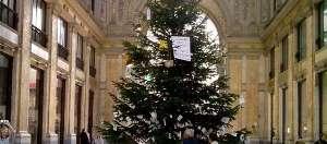 L'albero di Natale alla Galleria Umberto I (1)-2
