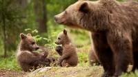 Italia: paese della biodiversità a rischio estinzione