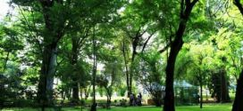 La Festa dell'albero 2016 all'orto botanico