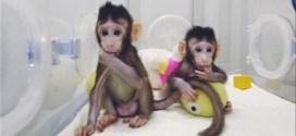 Cina, arrivano le prime due scimmie clonate
