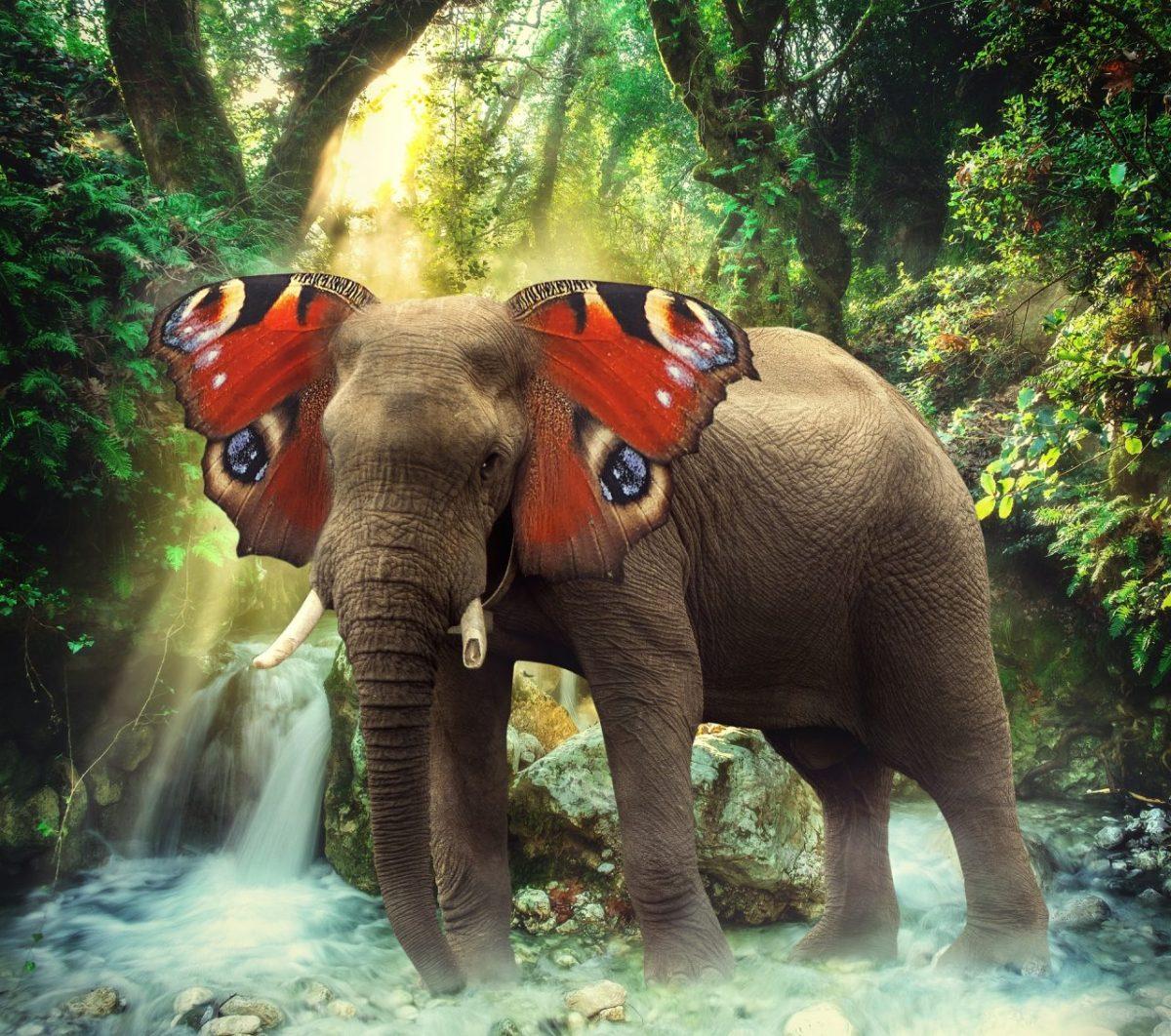 evoluzione elefante