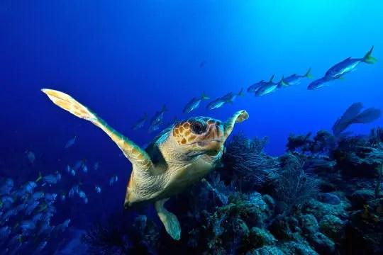 le vol de la tortue