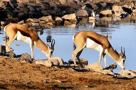 Les animaux m connus de la savane nuage ciel d 39 azur - Animaux savane africaine ...