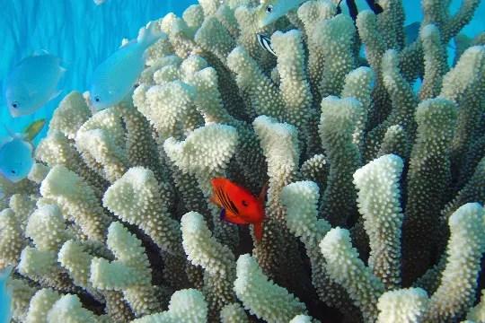 les récifs de corail dur