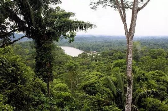 la forêt amazonienne de l'equateur, appelée également 'oriente'occupe la