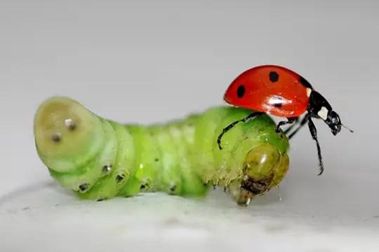 insectes colorés