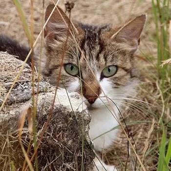 le chat 'joue' à chasser