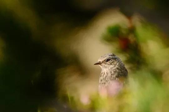 un oiseau en randonnée