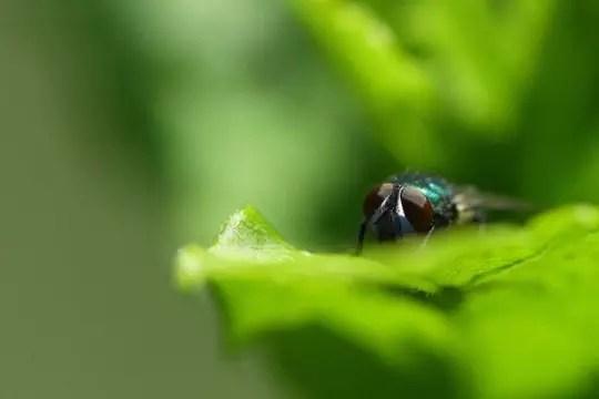 la mouche se cache