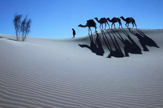 dunes du gourara