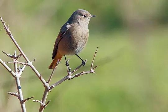 les oiseaux du méjean