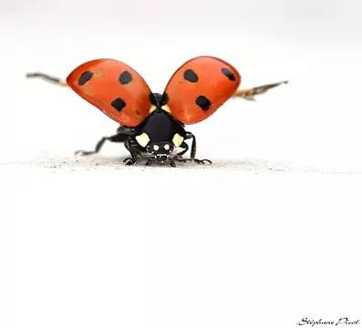 portraits d'insectes
