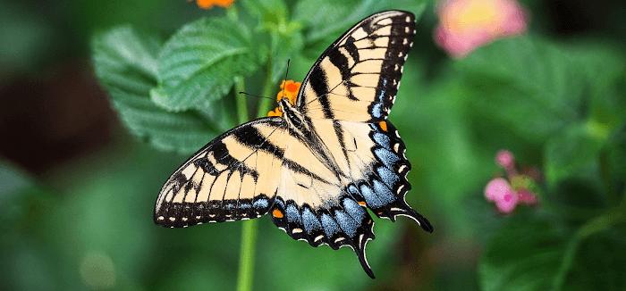 butterfly - web terminal based on websocket and tornado