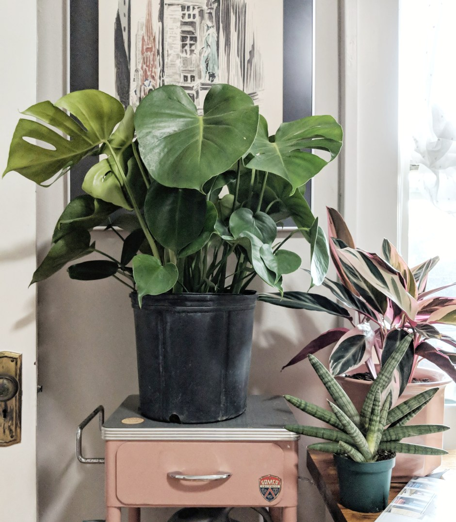 Five Ways to Kill Houseplants