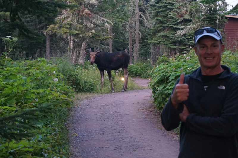This moose seemed only slightly interested in us.