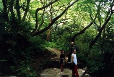 zkyotowoods