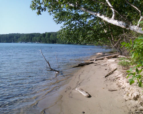 Shoreline of Walloon Lake