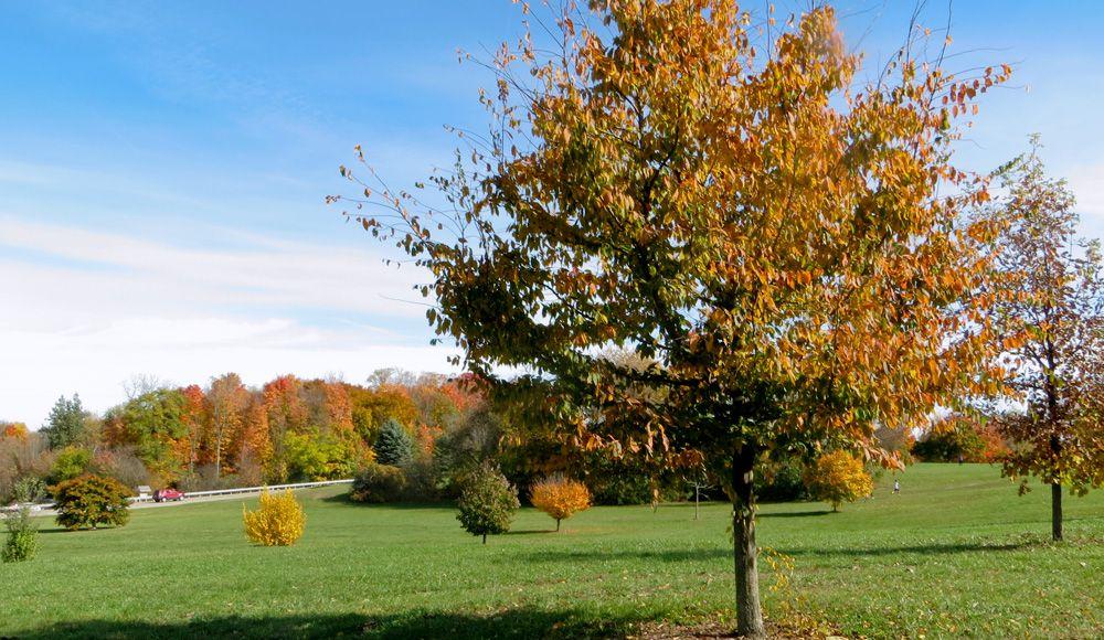 Bennett Arboretum