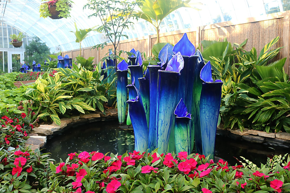 blue Pitcher Plants rise from a pond surrounded by ginger and magenta New Zealand Impatien flowers