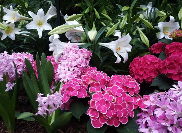 white lilies, pink cyclamens, and purple hydrangeas