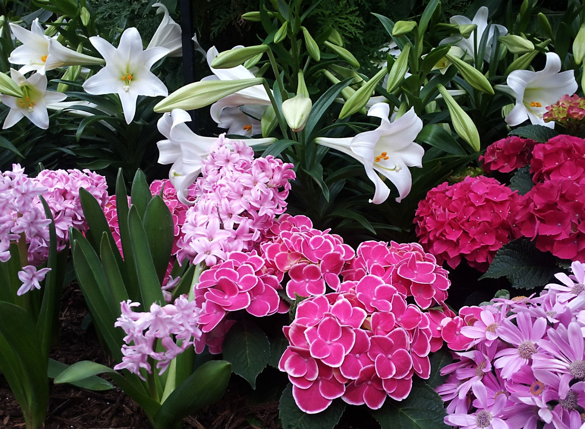 white lilies, pink cyclamens, and purple hydrangeas