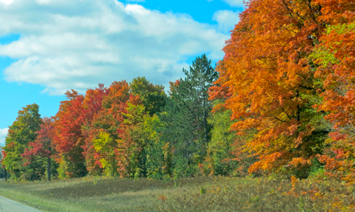 oak and maple trees showing orange and gold fall colors