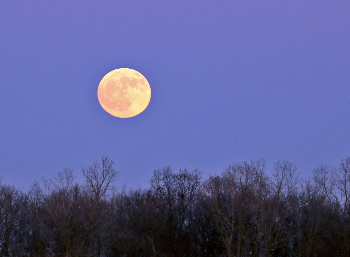 yellowish full moon glows in the blue sky over the bare tree tops.