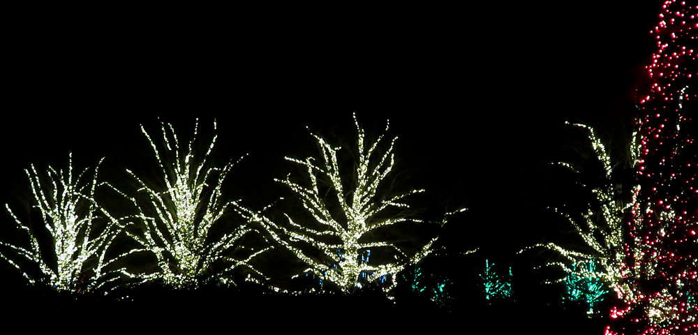 Colorful holiday lights shine brightly in the darkness at Longwood Gardens