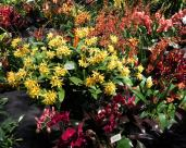 Orchids and bromeliads en masse in a flower bed