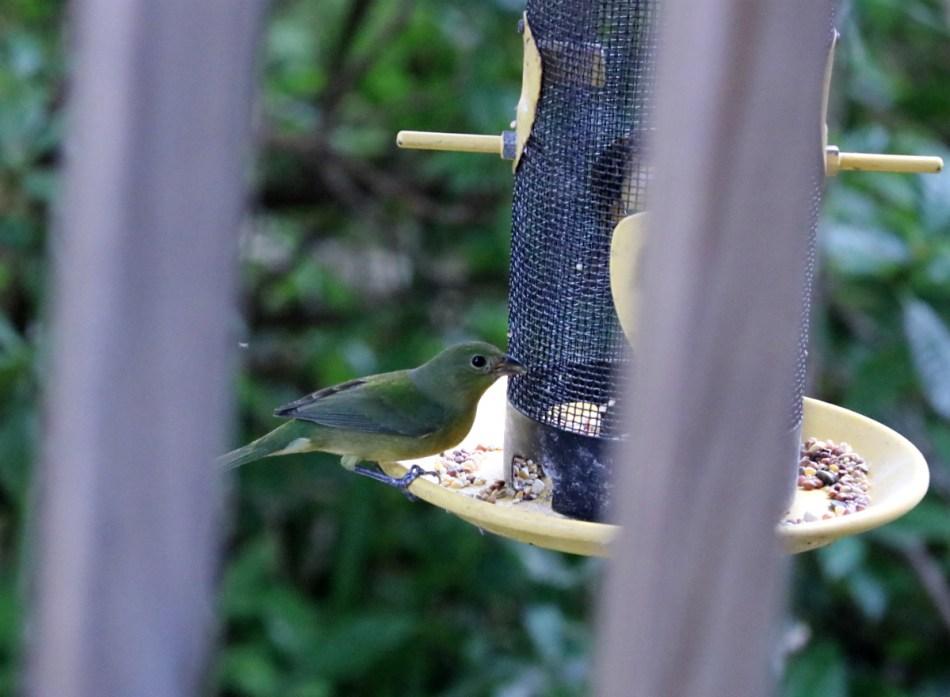 green bird perched on rim of bird feeder