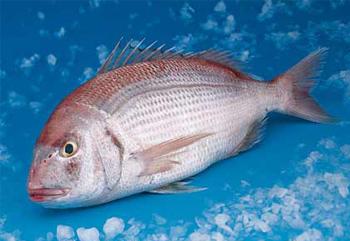 Φρέσκα Ψάρια Αλιείας