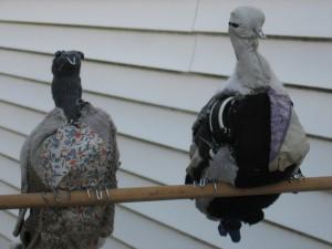 bagwell animals birds01