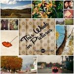 This Week in Pictures, Week 43, 2014