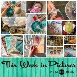 This Week in Pictures, Week 28, 2015