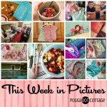 This Week in Pictures, Week 29, 2015