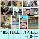This Week in Pictures, Week 33, 2015