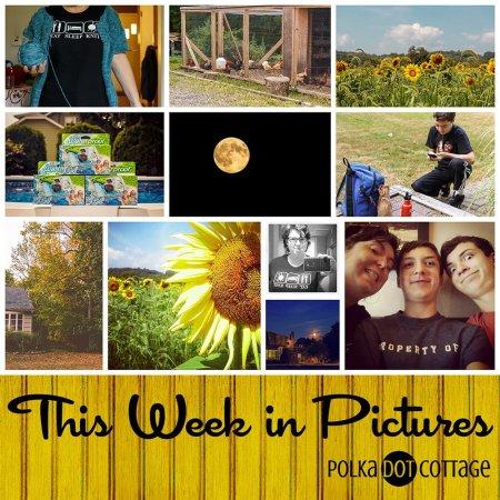 This Week in Pictures, Week 36, 2015