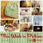 This Week in Pictures, Week 5, 2016
