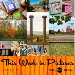 This Week in Pictures, Week 42, 2016