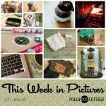This Week in Pictures, Week 6, 2017