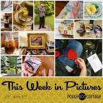 This Week in Pictures, Week 24, 2017