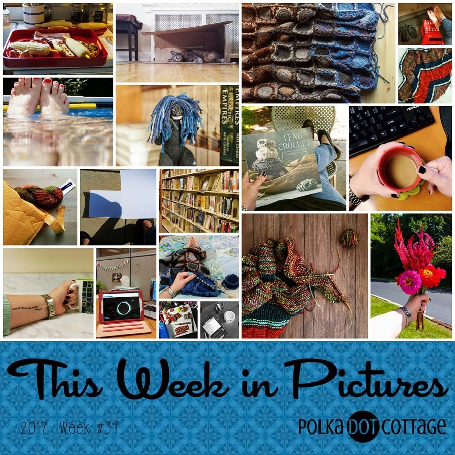 This Week in Pictures, Week 34, 2017
