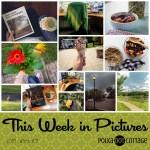 This Week in Pictures, Week 31, 2018